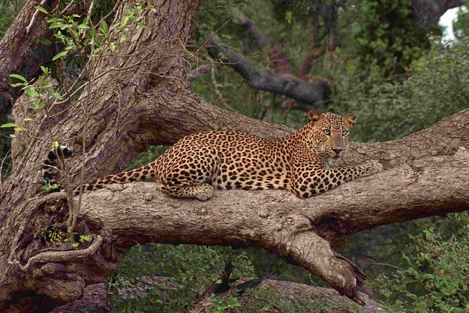 Wilpattu National park safari (All inclusive 02 Days Tour) photo 1