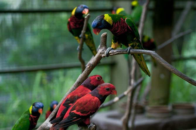 KL Bird Park,Butterfly & Garden Tour with Entry Tickets