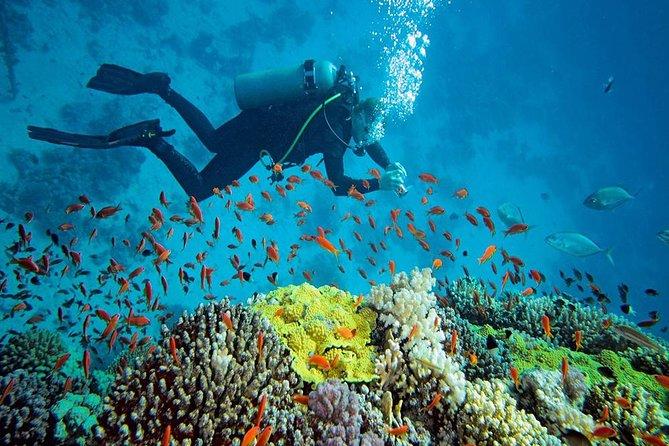Mantanani Island Diving Paradise Tour (Certified Diver) from Kota Kinabalu