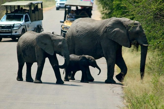 Kruger National Park 2 Days 1 Night Magical Safari from Johannesburg photo 4