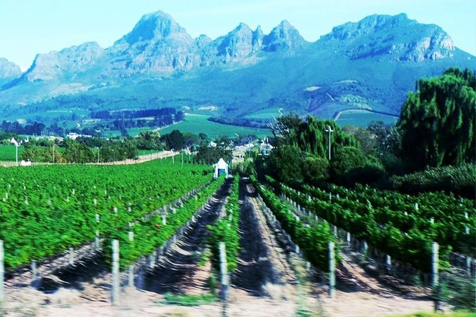 Full Day Wine Tour From Cape Town photo 7