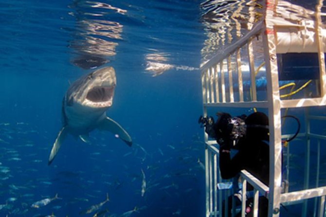Shark Diving and Viewing Full Day Tour from Cape Town