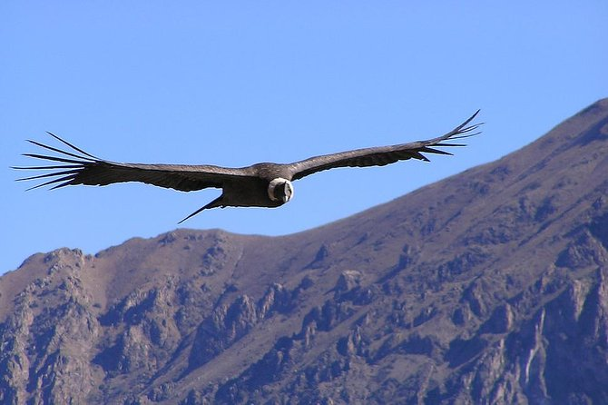 Condor Tour from Cusco - 1 Day