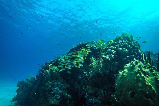 Semissubmarino Manatí ou Nautilus Experience em San Andrés