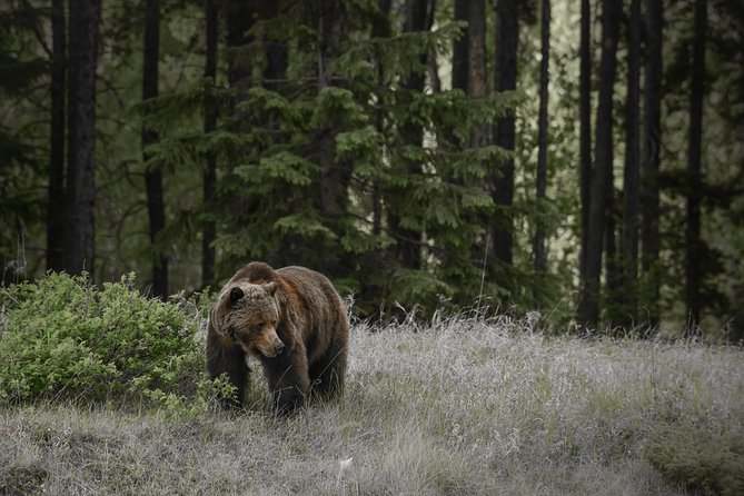 Discover Jasper and its Wildlife