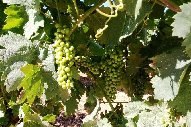 Algarve Wines Route