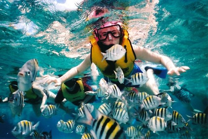 Private Tour: Tioman Island Reef Snorkel and Fireflies Day Trip from Singapore