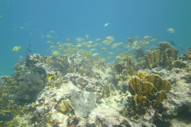 Try Scuba Diving with Professional Scuba Instructor