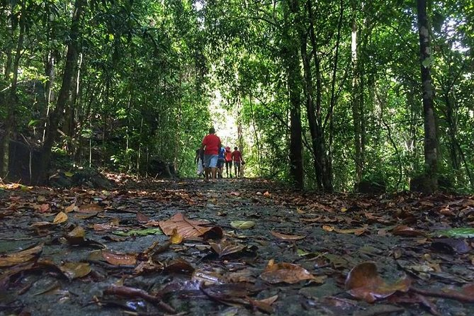 Private Day tour- Rain Forest trekking from Galle