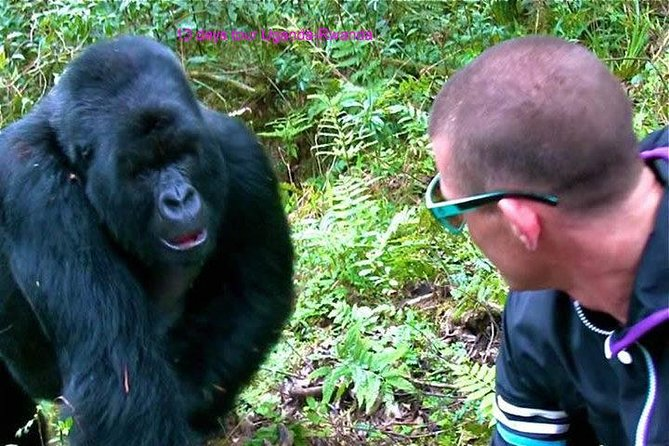 Cheap 3 Day Gorilla Trekking Tour