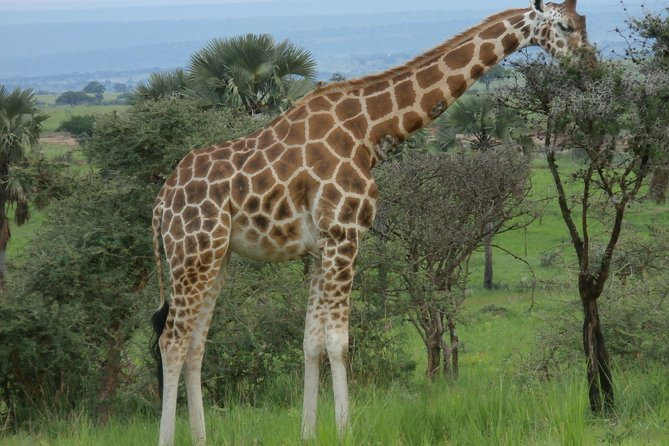 Full-Day Akagera National Park Safari from Kigali