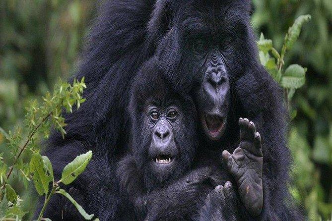Gorilla Trekking Day Tour from Kigali