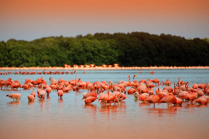 Private Tour: Celestun Biosphere Reserve by Yucatan Concierge