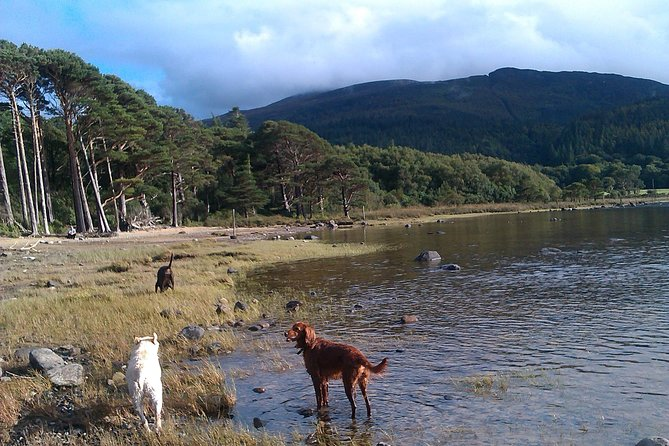 Guided Killarney National Park Walking Tour