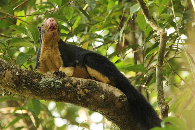 Private Day Trip: Hiking in Sinharaja Rain Forest