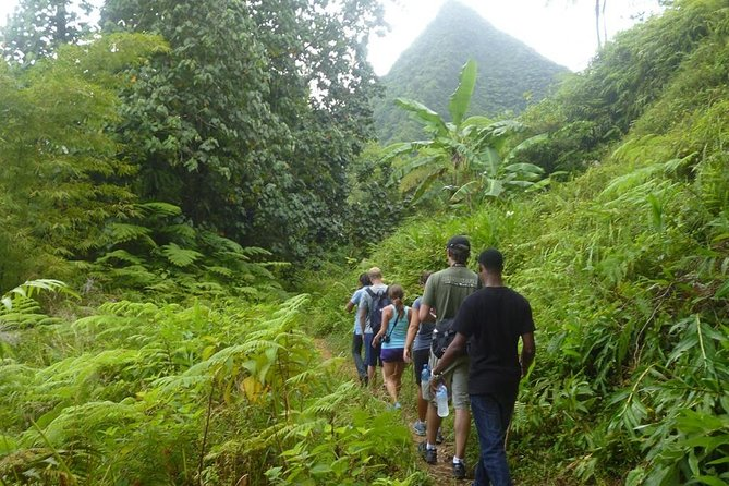 St Lucia Rainforest Hiking Tour photo 1
