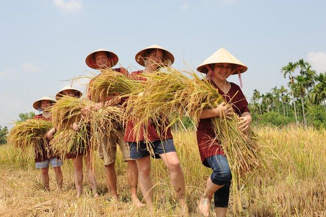 Viagem de um dia à fazenda de arroz de meio dia