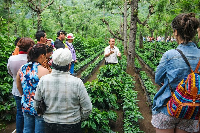 Farm and Coffee Tour Matagalpa from Managua