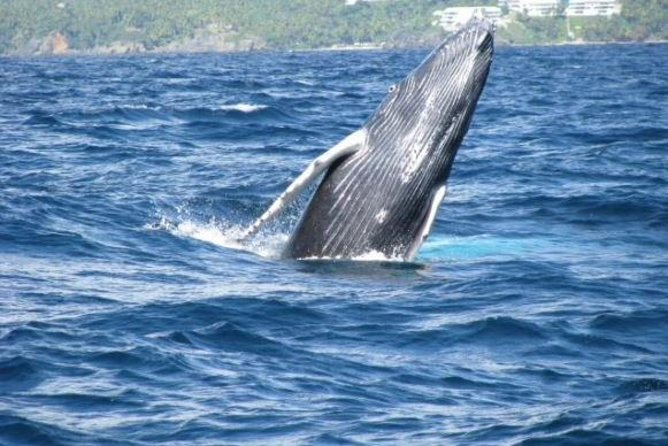 Samana Whale Watching Tour with Biologist Guide Kim Beddall