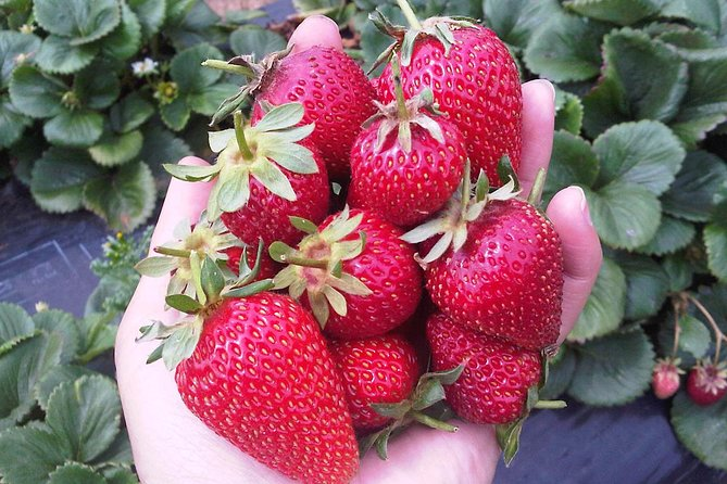 Mornington Peninsula including Strawberry Farm Day Tour from Melbourne photo 1