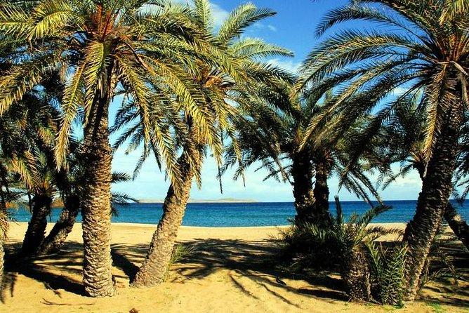 ヴァイの椰子の森 - アドベンチャーツアー