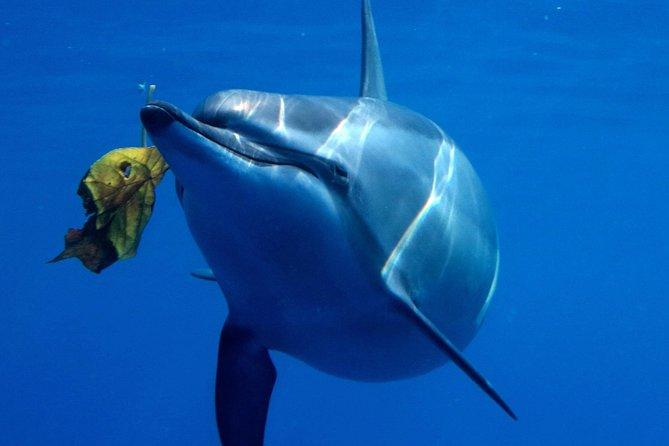 Dolphin Dreaming - Dolphin Swim