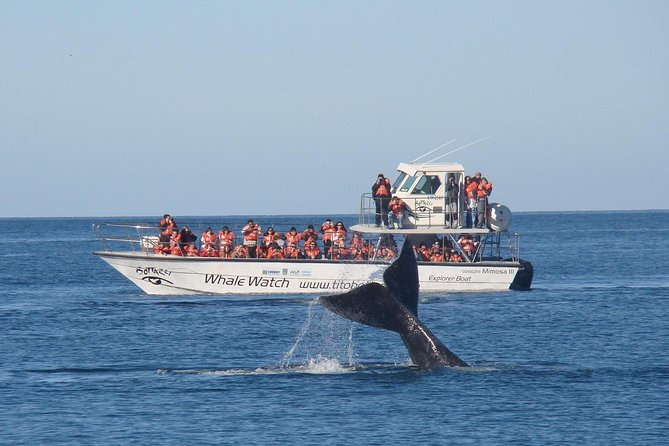 Guided Whale Watching Tour from Chubut