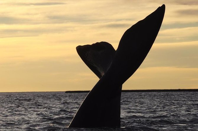 4-Day Tour to Puerto Madryn by Air from Buenos Aires