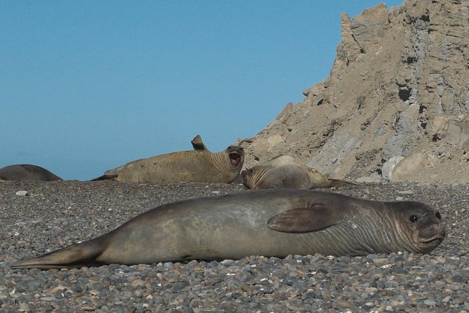 Full Day Tour to Punta Ninfas from Puerto Madryn