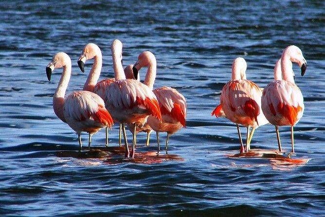 Laguna del Toro and Flamingo-Watching 4WD Tour from Salta
