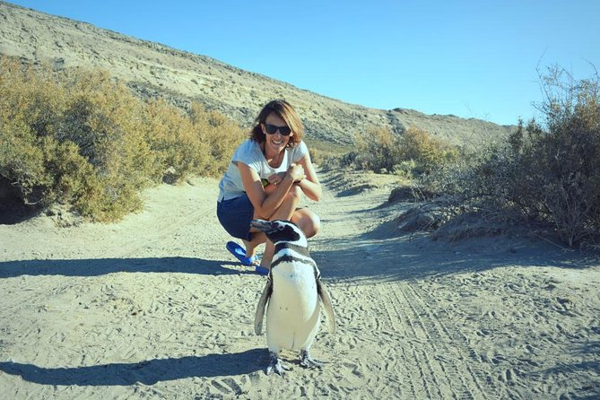 Patagonia Ranch and El Pedral Penguins Colony Full-Day Tour from Puerto Madryn