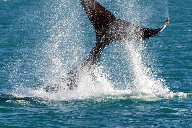 Whale-Watching Cruise and Hillarys Boat Harbour Day Trip from Perth