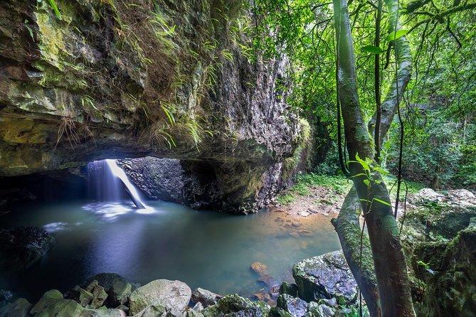 Springbrook and Tamborine Rainforest Tour Including Natural Bridge and Glow Worm Cave