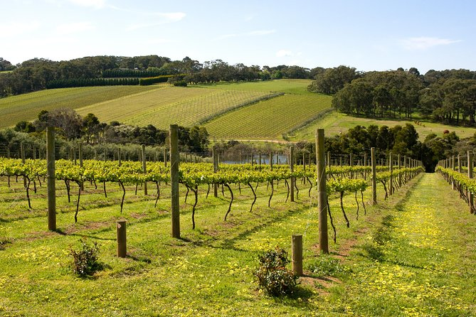 Mornington Peninsula Small-Group Wine Tour with Lunch and Morning Tea