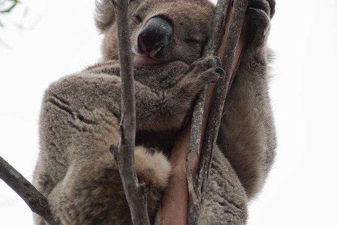 ile-kangourou-tour-en-quatre-quatre-depuis-adelaide