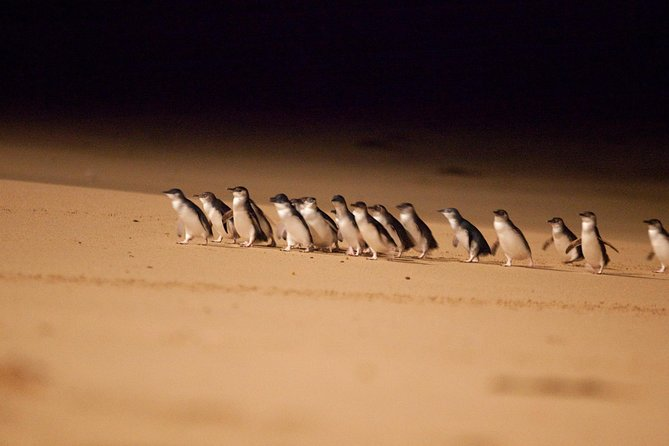 Melbourne Combo: Sightseeingtur med Phillip Island Penguins og Great Ocean Road Day Trip fra Melbourne