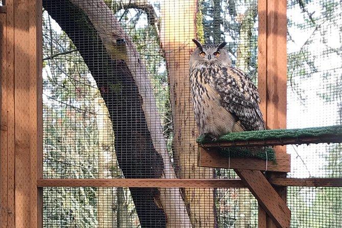 Dmitri the owl