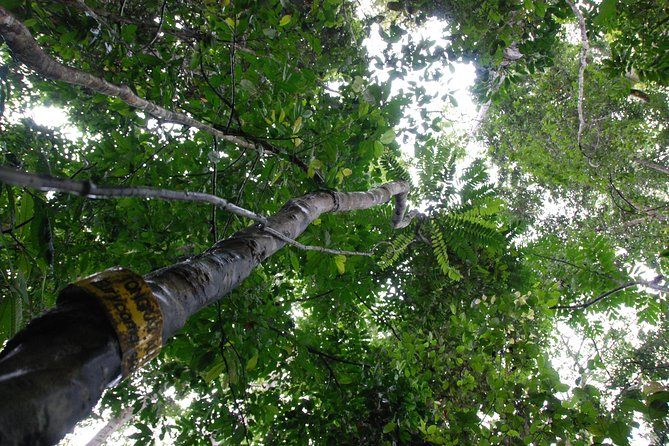 Half-Day Langkawi Rainforest Trekking Tour