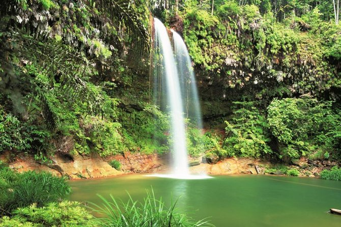 Half-Day Lambir Hills National Park Tour from Miri