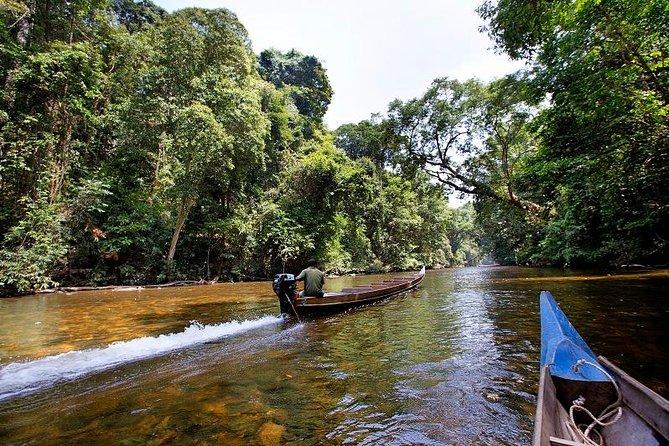 3-Day Jungle Experience in Taman Negara from Kuala Lumpur