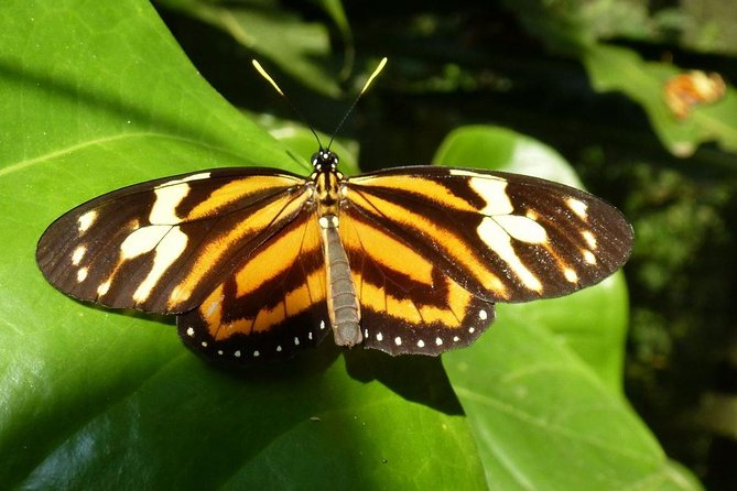 Admission to Andoke Butterfly Center in Cali with Guide