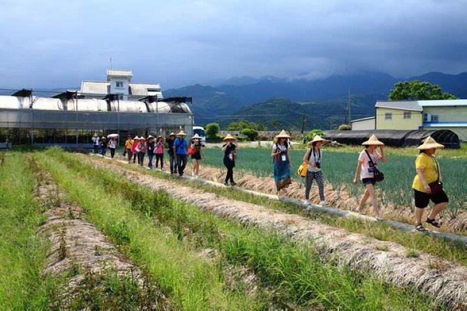 Culture,Making pie,Hot springs in Yilan Full Day Tour