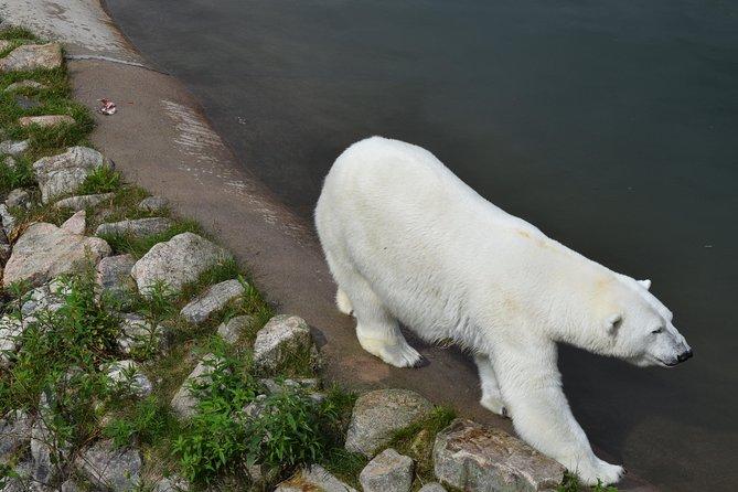 Day Trip to Ranua Arctic Wildlife Park