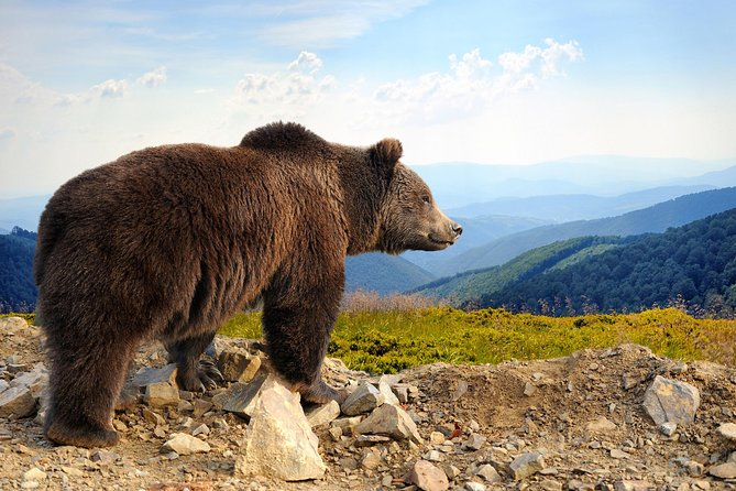 Bear Sanctuary and Bran Castle with a Professional Licensed Guide—Day Trip