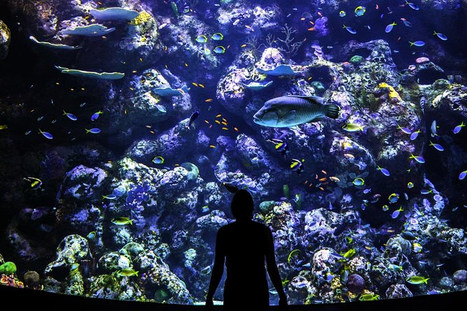 Cairns Aquarium Behind the Scenes Tours