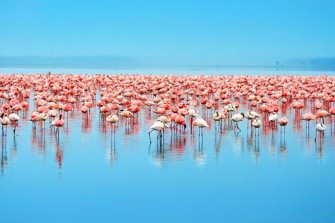 Day Trip to Celestun: Flamingos, Mangrove Boat Ride and Beach Break