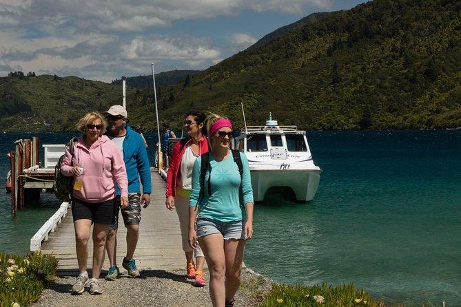 Marlborough Sounds Cruise & Promenade de 3 heures
