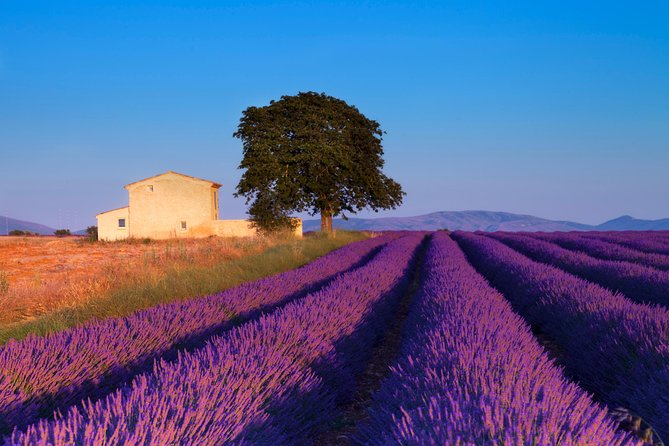 Provence Lavender Fields Tour From Aix En Provence 2021