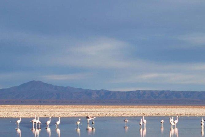 Atacama Salt Flat and Toconao Town Tour