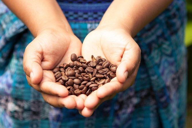 Escapada de un día a Sierra Madre de Oaxaca: Plantación de café Finca La Gloria y baño en una catarata